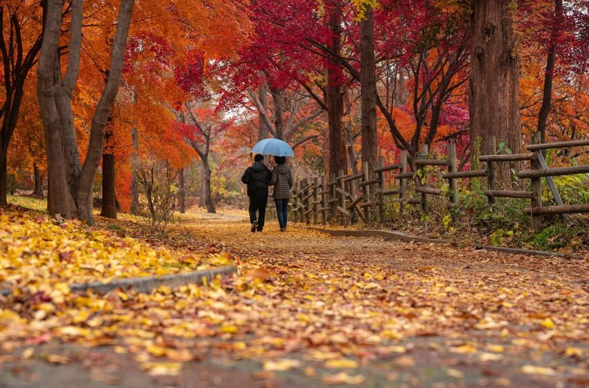 How to Stay Healthy During the Fall